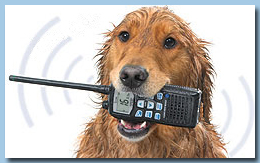 Dog with Icom Marine VHF Radio